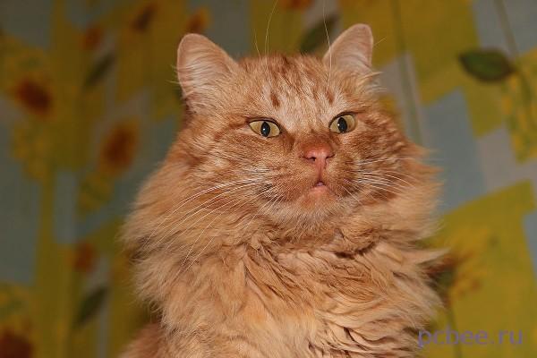 Фотография кота Мурзика готова к загрузке в Интернет